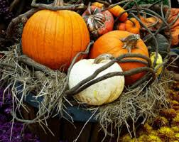 Pumpkin: not only for decoration.
